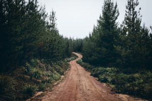 forest-road.jpg